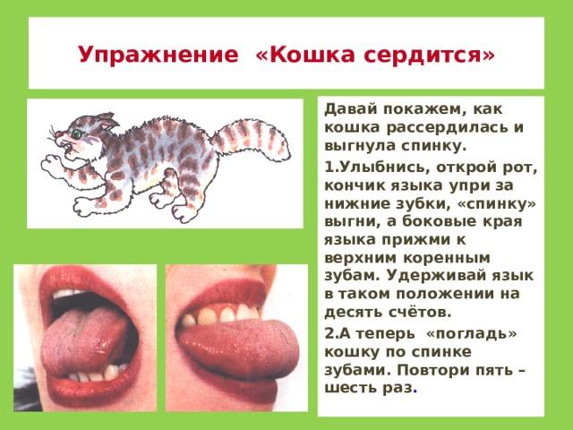 Упражнение «Кошка сердится» Давай покажем, как кошка рассердилась и выгнула спинку. Улыбнись, открой рот, кончик языка упри за нижние зубки, «спинку» выгни, а боковые края языка прижми к верхним коренным зубам. Удерживай язык в таком положении на десять счётов. А теперь «погладь» кошку по спинке зубами. Повтори пять – шесть раз .