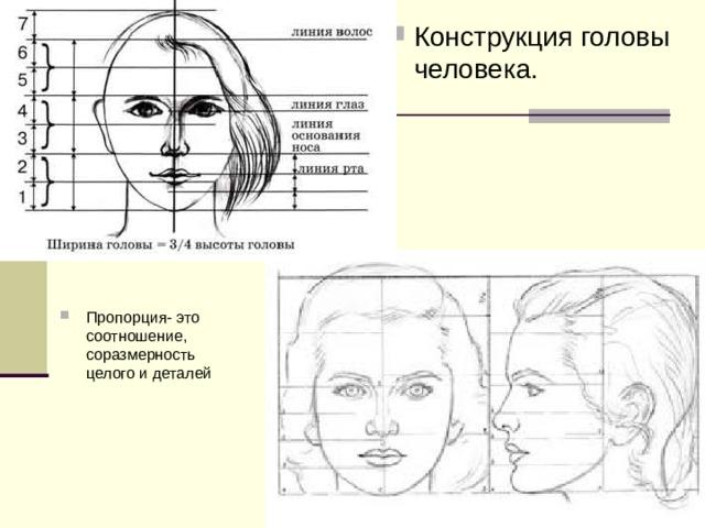 Конструкция головы человека. Пропорция- это соотношение, соразмерность целого и деталей