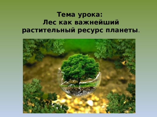 Тема урока:  Лес как важнейший растительный ресурс планеты .