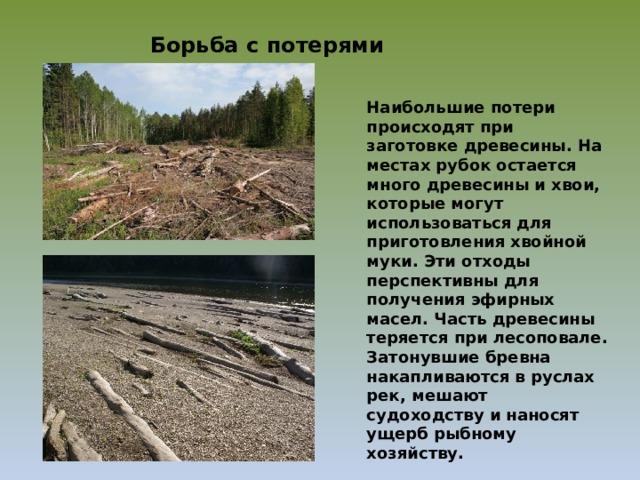 Борьба с потерями древесины Наибольшие потери происходят при заготовке древесины. На местах рубок остается много древесины и хвои, которые могут использоваться для приготовления хвойной муки. Эти отходы перспективны для получения эфирных масел. Часть древесины теряется при лесоповале. Затонувшие бревна накапливаются в руслах рек, мешают судоходству и наносят ущерб рыбному хозяйству.