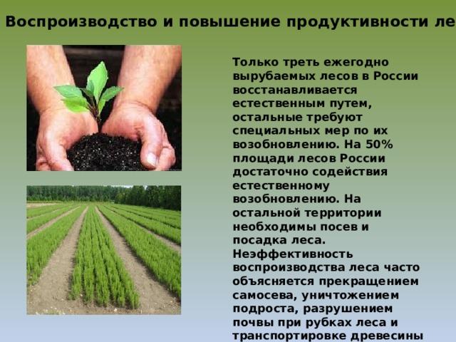 Воспроизводство и повышение продуктивности лесов Только треть ежегодно вырубаемых лесов в России восстанавливается естественным путем, остальные требуют специальных мер по их возобновлению. На 50% площади лесов России достаточно содействия естественному возобновлению. На остальной территории необходимы посев и посадка леса. Неэффективность воспроизводства леса часто объясняется прекращением самосева, уничтожением подроста, разрушением почвы при рубках леса и транспортировке древесины