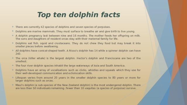 Top ten dolphin facts