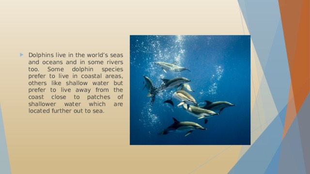Dolphins live in the world's seas and oceans and in some rivers too. Some dolphin species prefer to live in coastal areas, others like shallow water but prefer to live away from the coast close to patches of shallower water which are located further out to sea.