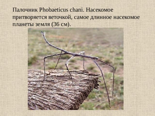 Скорпионы могут обходиться без еды более года. Кроме того, скорпиона можно заморозить на несколько недель, после чего разморозить и он останется жив и здоров.