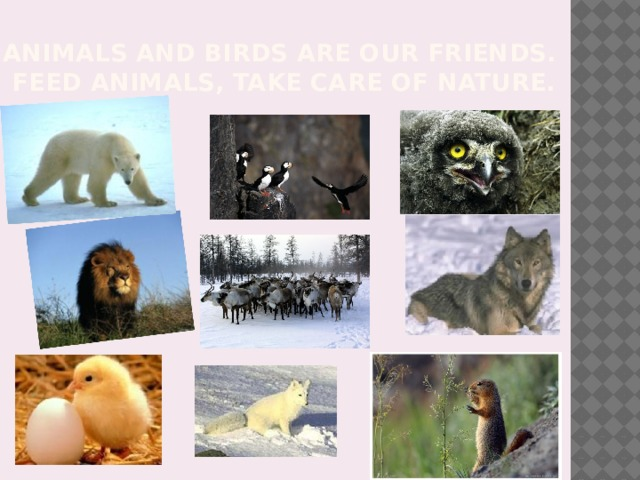 Animals and birds are our friends.  Feed animals, take care of nature.