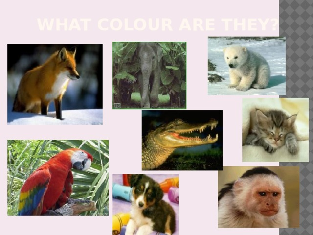 What colour are they?