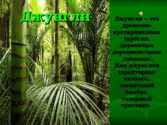 Джунгли Джунгли – это древесно-кустарниковые заросли, перевитые деревянистыми лианами. Для джунглей характерны: пальмы, гигантский бамбук, сахарный тростник.