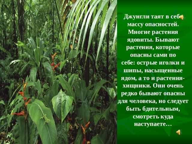 Джунгли таят в себе массу опасностей. Многие растения ядовиты. Бывают растения, которые опасны сами по себе:острые иголки и шипы, насыщенные ядом, а то и растения-хищники. Они очень редко бывают опасны для человека, но следует быть бдительным, смотреть куда наступаете…