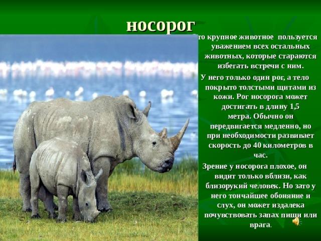 носорог Это крупное животное пользуется уважением всех остальных животных, которые стараются избегать встречи с ним. У него только один рог, а тело покрыто толстыми щитами из кожи.Рогносорога может достигать в длину1,5 метра.Обычно он передвигается медленно, но при необходимости развивает скорость до 40 километров в час. Зрение у носорога плохое, он видит только вблизи, как близорукий человек. Но зато у него тончайшее обоняние и слух, он может издалека почувствовать запах пищи или врага .