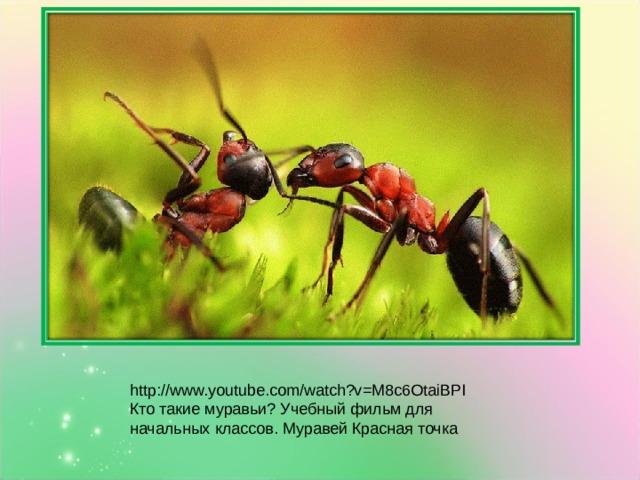 http://www.youtube.com/watch?v=M8c6OtaiBPI Кто такие муравьи? Учебный фильм для начальных классов. Муравей Красная точка