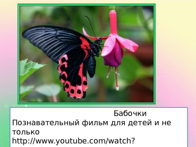 Бабочки Познавательный фильм для детей и не только http://www.youtube.com/watch?v=SL_5lF2Emig