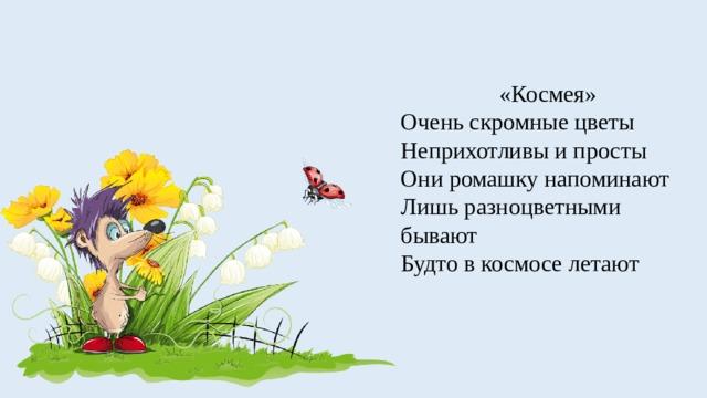 «Космея» Очень скромные цветы Неприхотливы и просты Они ромашку напоминают Лишь разноцветными бывают Будто в космосе летают