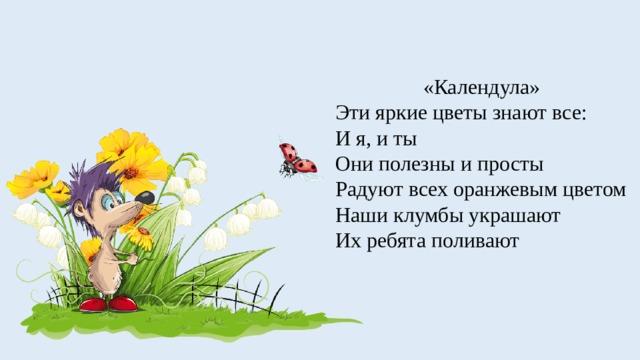 «Календула» Эти яркие цветы знают все: И я, и ты Они полезны и просты Радуют всех оранжевым цветом Наши клумбы украшают Их ребята поливают
