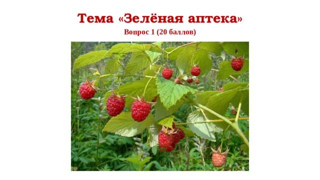 Тема «Зелёная аптека» Вопрос 1 (20 баллов)