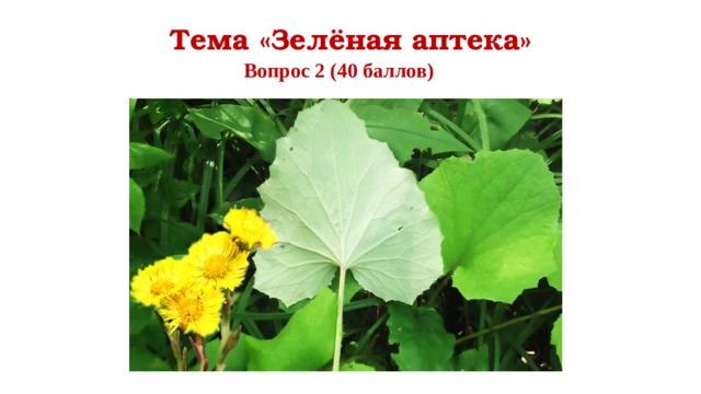 Тема «Зелёная аптека» Вопрос 2 (40 баллов)