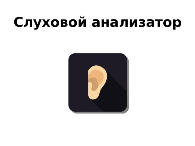 Слуховой анализатор