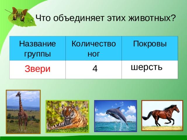 Что объединяет этих животных? Название группы Количество ног Звери Покровы шерсть 4
