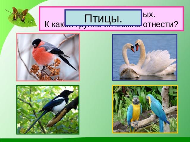 Назови этих животных.  К какой группе их можно отнести? Птицы.