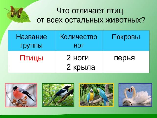 Что отличает птиц  от всех остальных животных? Название группы Количество ног Птицы Покровы 2 ноги 2 крыла перья