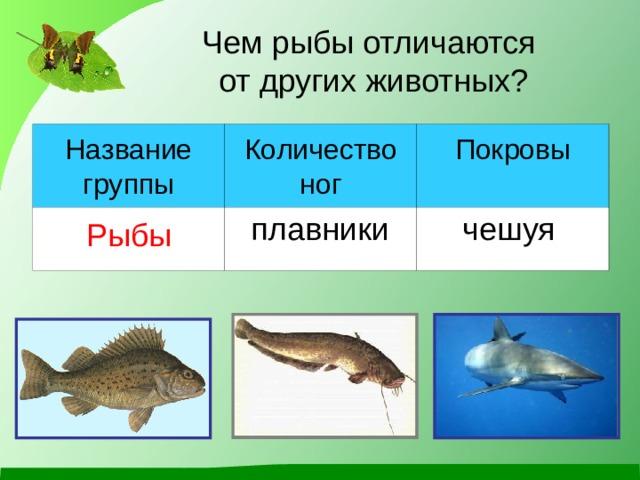 Чем рыбы отличаются  от других животных? Название группы Количество ног Рыбы Покровы плавники чешуя
