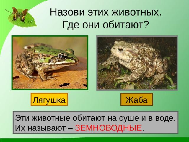 Назови этих животных.  Где они обитают? Лягушка Жаба Эти животные обитают на суше и в воде. Их называют – ЗЕМНОВОДНЫЕ .