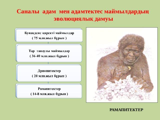 Саналы адам мен адамтектес маймылдардың эволюциялық дамуы  РАМАПИТЕКТЕР