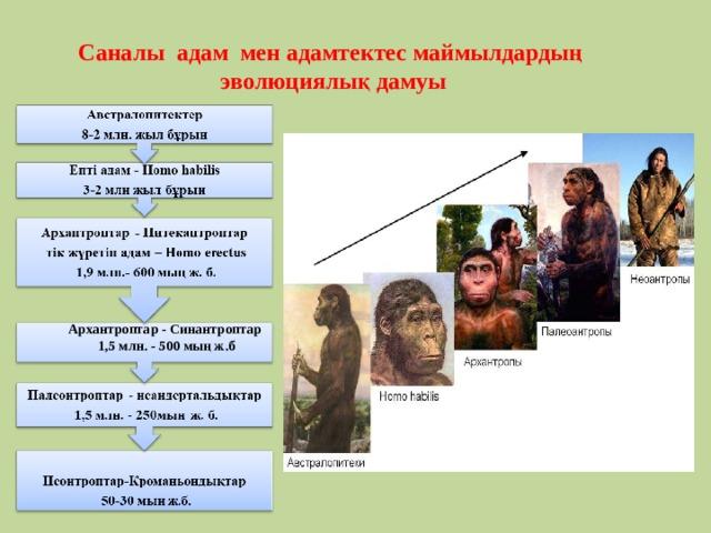 Саналы адам мен адамтектес маймылдардың эволюциялық дамуы    Архантроптар - Синантроптар 1,5 млн. - 500 мың ж.б