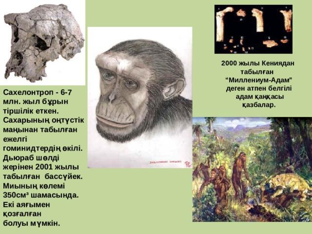 """2000 жылы Кениядан табылған """" Миллениум-Адам"""" деген атпен белгілі  адам қаңқасы қазбалар. Сахелонтроп - 6-7 млн. жыл бұрын тіршілік еткен. Сахарының оңтүстік маңынан табылған ежелгі гоминидтердің өкілі. Дьюраб шөлді жерінен 2001 жылы табылған бассүйек. Миының көлемі 350см³ шамасында. Екі аяғымен қозғалған болуы мүмкін."""