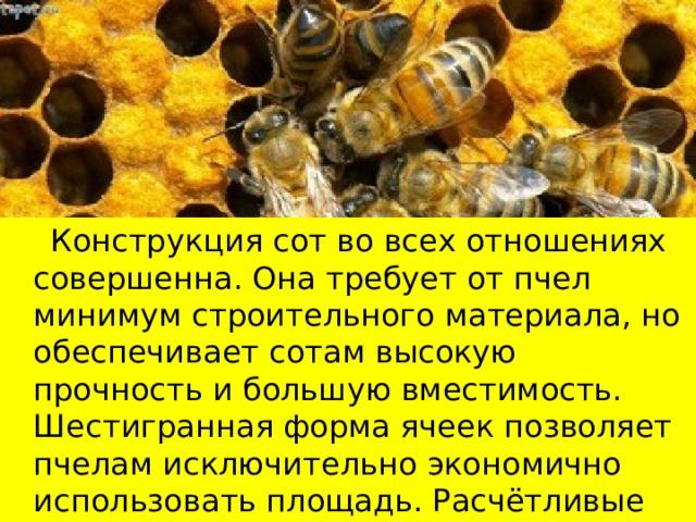 Конструкция сот во всех отношениях совершенна. Она требует от пчел минимум строительного материала, но обеспечивает сотам высокую прочность и большую вместимость. Шестигранная форма ячеек позволяет пчелам исключительно экономично использовать площадь. Расчётливые пчёлы заполняют пространство так, что не остаётся просветов, экономя при этом 2% воска.