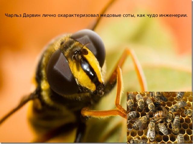 Чарльз Дарвин лично охарактеризовал медовые соты, как чудо инженерии.