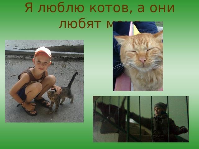 Я люблю котов, а они любят меня