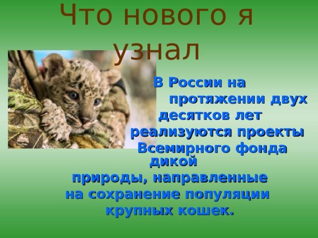 Что нового я узнал  В России на  протяжении двух  десятков лет  реализуются  проекты   Всемирного фонда дикой природы, направленные на сохранение популяции крупных кошек.