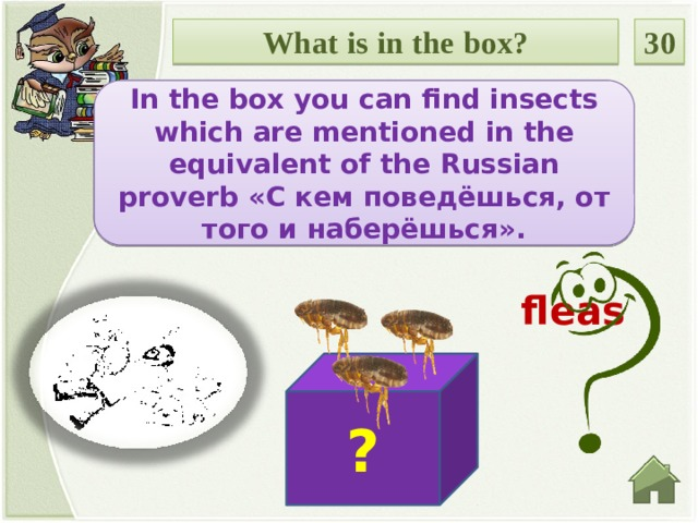 What is in the box? 30 In the box you can find insects which are mentioned in the equivalent of the Russian proverb «С кем поведёшься, от того и наберёшься». Введите вопрос fleas ?