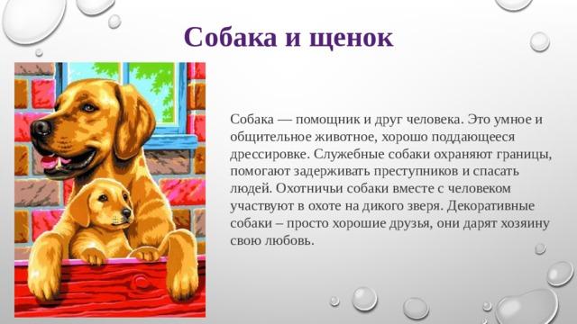 Собака и щенок Собака — помощник и друг человека. Это умное и общительное животное, хорошо поддающееся дрессировке. Служебные собаки охраняют границы, помогают задерживать преступников и спасать людей. Охотничьи собаки вместе с человеком участвуют в охоте на дикого зверя. Декоративные собаки – просто хорошие друзья, они дарят хозяину свою любовь.