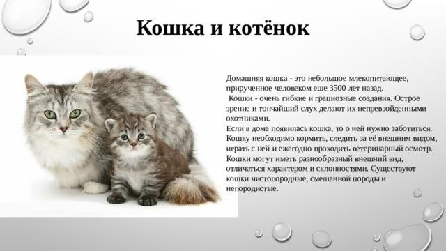 Кошка и котёнок Домашняя кошка - это небольшоемлекопитающее, прирученноечеловеком еще 3500 лет назад.  Кошки - очень гибкие и грациозные создания.Острое зрение и тончайший слух делают их непревзойденными охотниками. Если в доме появилась кошка, то о ней нужно заботиться. Кошку необходимо кормить, следить за её внешним видом, играть с ней и ежегодно проходить ветеринарный осмотр. Кошки могут иметь разнообразный внешний вид, отличаться характером и склонностями.Существуют кошки чистопородные, смешанной породы и непородистые.