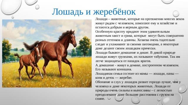 Лошадь и жеребёнок Лошади – животные, которые на протяжении многих веков живут рядом с человеком, помогают ему в хозяйстве и остаются добрым и верным другом. Особенную красоту придают этим удивительным животным хвост и грива, которые могут быть совершенно разных оттенков и длинны. Хозяева очень тщательно следят и ухаживают за своими питомцами, а некоторые даже делают своим лошадкам прически. Лошади бывают домашние и дикие. В дикой природе лошади живут группами, их называют табунами. Так им легче защищаться от нападок врагов. А домашние - живут в домике, построенном человеком. Его называют конюшня. Лошадиная семья состоит из мамы — лошади, папы — коня и деток — жеребят. Обоняние и слух у лошадок развит гораздо лучше, чем у человека и даже некоторых животных. Лошади от природы очень сильны и выносливы – с легкостью преодолевают даже большие расстояния с грузом на спине.
