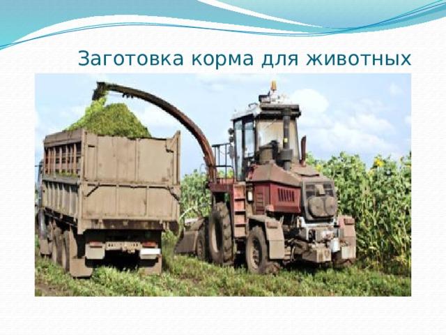 Заготовка корма для животных