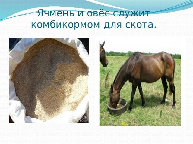 Ячмень и овёс служит комбикормом для скота.