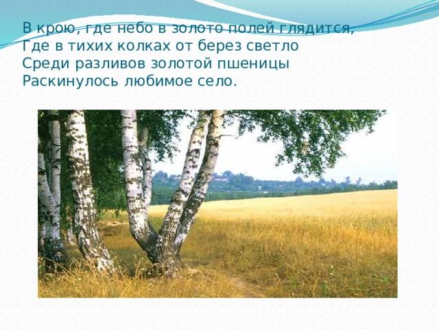 В крою, где небо в золото полей глядится,  Где в тихих колках от берез светло  Среди разливов золотой пшеницы  Раскинулось любимое село.