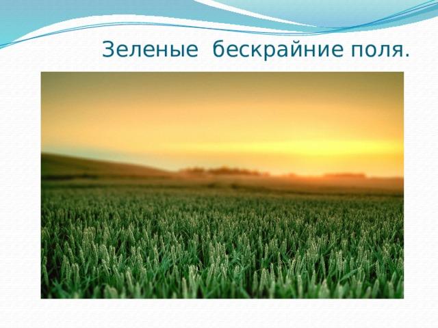 Зеленые бескрайние поля.