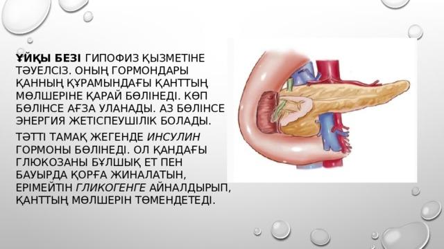 Ұйқы безі гипофиз қызметіне тәуелсіз. Оның гормондары қанның құрамындағы қанттың мөлшеріне қарай бөлінеді. Көп бөлінсе ағза уланады. Аз бөлінсе энергия жетіспеушілік болады. Тәтті тамақ жегенде инсулин гормоны бөлінеді. Ол қандағы глюкозаны бұлшық ет пен бауырда қорға жиналатын, ерімейтін гликогенге айналдырып, қанттың мөлшерін төмендетеді.