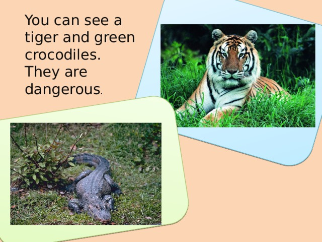 You can see a tiger and green crocodiles. They are dangerous .