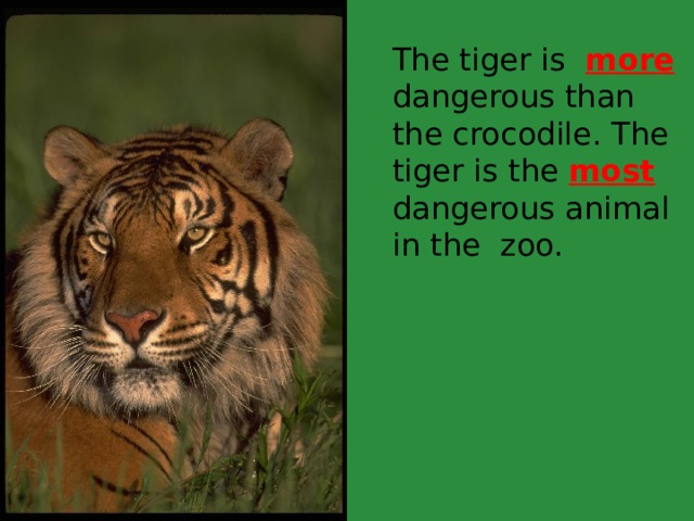 The tiger is more dangerous than the crocodile. The tiger is the most dangerous animal in the zoo.