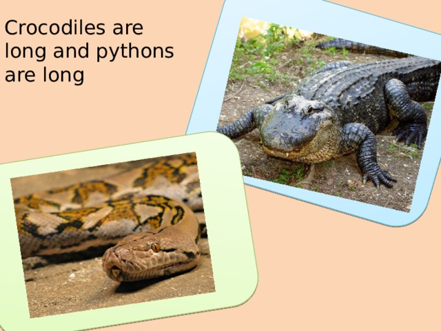 Crocodiles are long and pythons are long