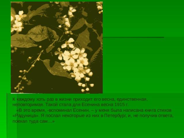 К каждому хоть раз в жизни приходит его весна, единственная, неповторимая. Такой стала для Есенина весна 1915 г.  «В это время, -вспоминал Есенин. – у меня была написана книга стихов «Радуница». Я послал некоторые из них в Петербург, и, не получив ответа, поехал туда сам…»