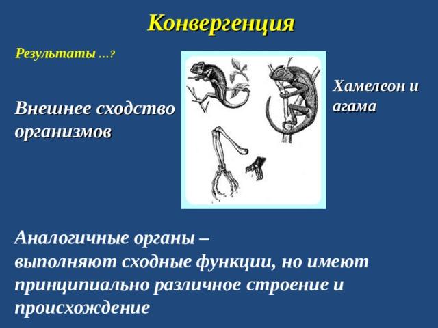 Конвергенция Результаты …? Хамелеон и агама Внешнее сходство организмов Аналогичные органы – выполняют сходные функции, но имеют принципиально различное строение и происхождение