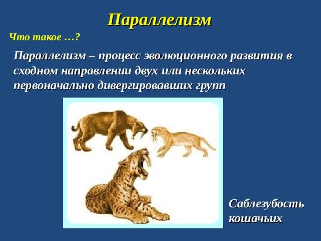 Параллелизм Что такое …? Параллелизм – процесс эволюционного развития в сходном направлении двух или нескольких первоначально дивергировавших групп Саблезубость кошачьих