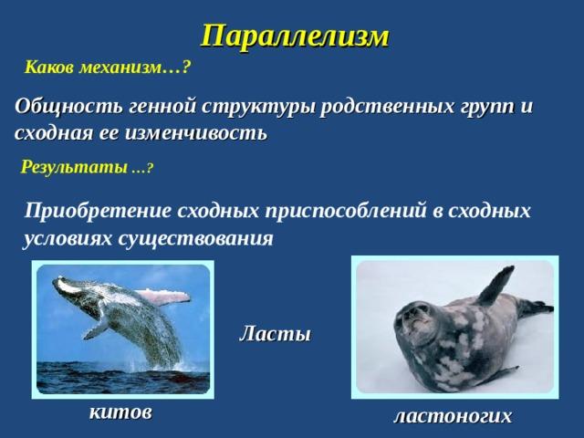 Параллелизм Каков механизм…? Общность генной структуры родственных групп и сходная ее изменчивость Результаты …? Приобретение сходных приспособлений в сходных условиях существования Ласты китов ластоногих