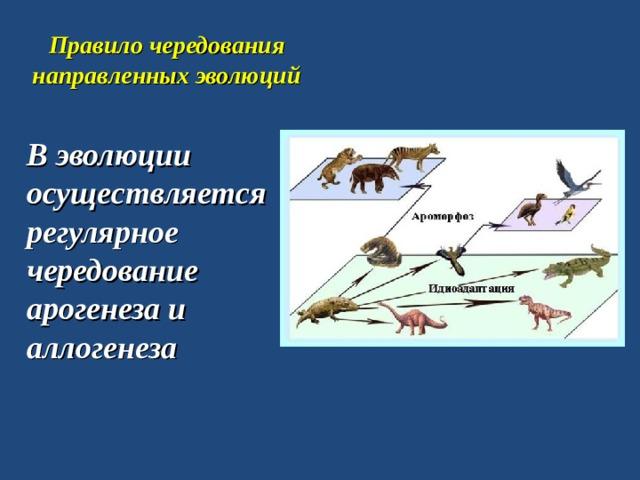 Правило чередования направленных эволюций В эволюции осуществляется регулярное чередование арогенеза и аллогенеза