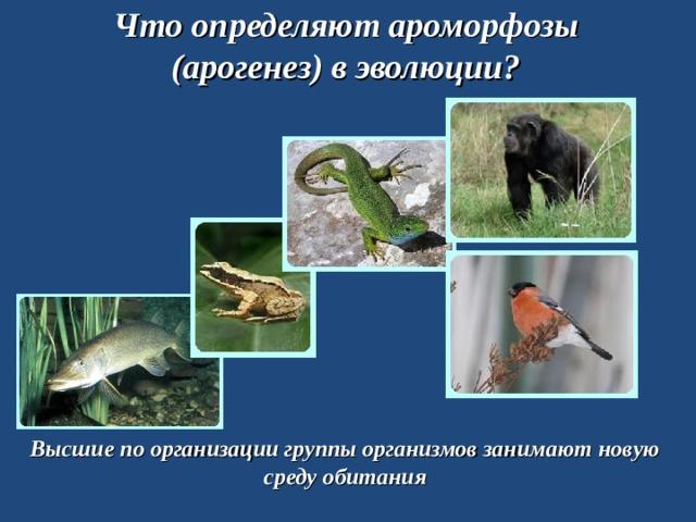 Что определяют ароморфозы (арогенез) в эволюции? Высшие по организации группы организмов занимают новую среду обитания